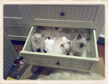 A Drawer Full of Trouble!
